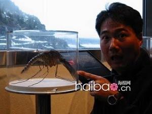 nyamuk terbesar