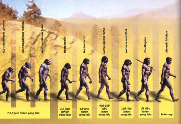 Sketsa Evolusi Darwin